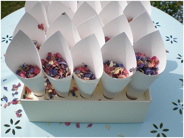 confetti cones delphinium