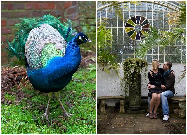 Peacock Blue & Green: Engagement | Love Shoot