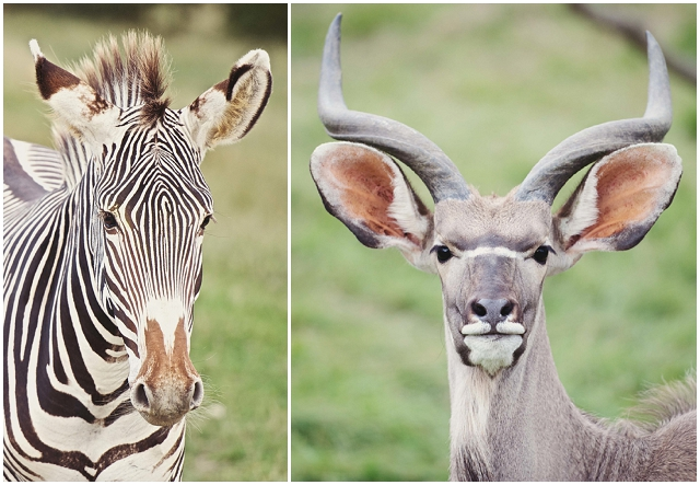 Unique & Intimate: Safari   Real Wedding