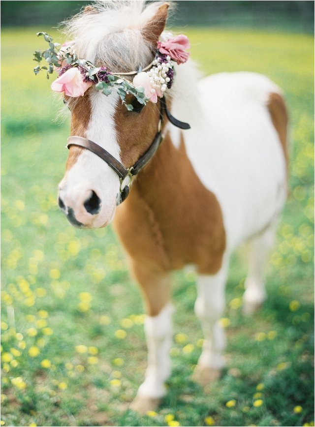 Mini horse with flower crown