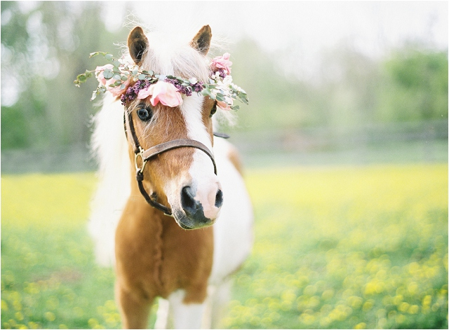 Anthropologie | Mini Horses: Styled Wedding Shoot