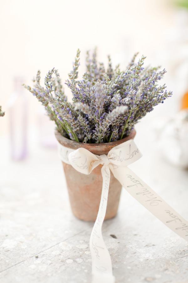sonoma_lavender_ktmerry_62