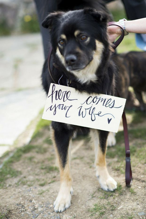 dog signage for wedding