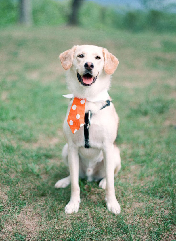 doggie tie for wedding