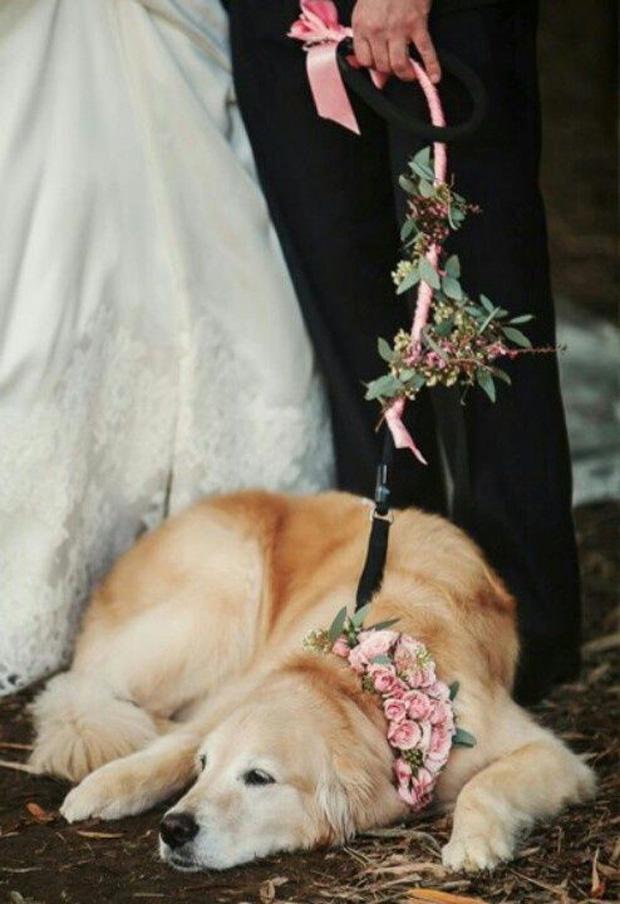 floral dog lead