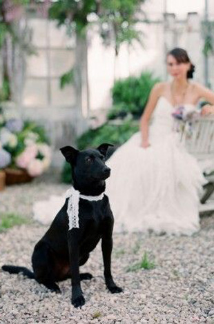 lace ribbon tie for wedding dog