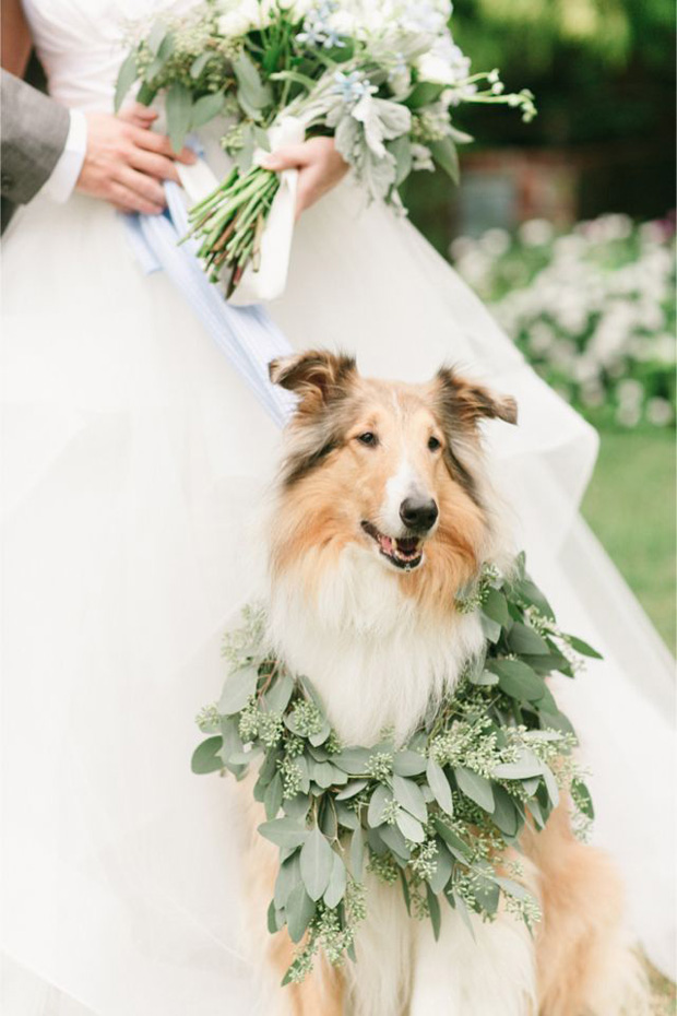 wedding dog wreath