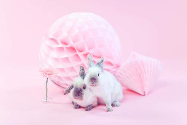 Blushing Bride and Bunnies Inspiration Shoot (21)