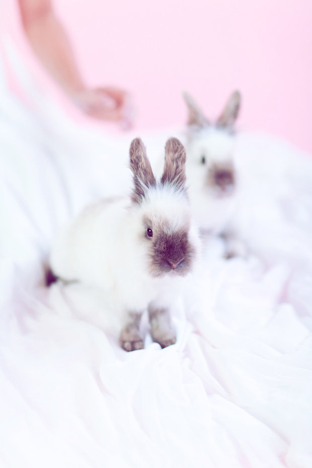 Blushing Bride and Bunnies Inspiration Shoot