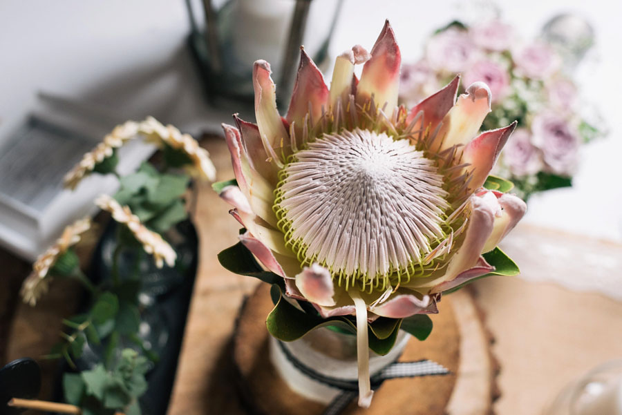 A Pretty Blush Pink Wedding with Proteas, Bunting & Lace Mike & Zoe (13)