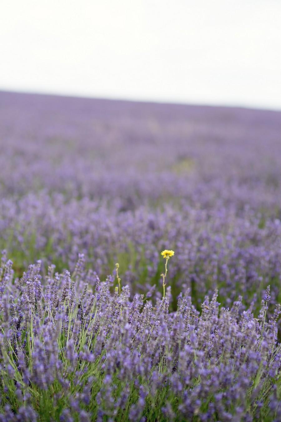 Lavender bridal_July 2017_017