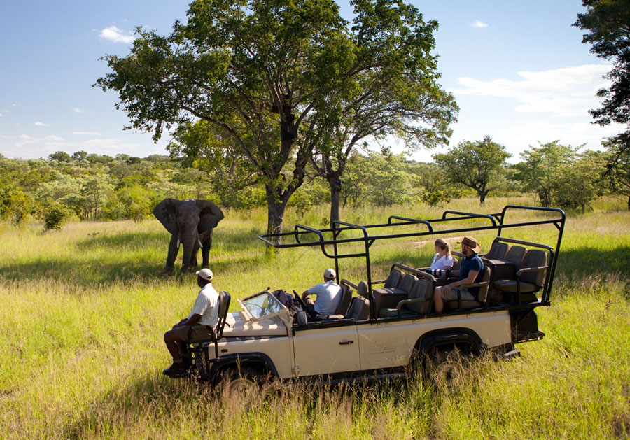 Safari honeymoon